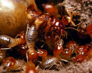 Tampa Termite Treatments